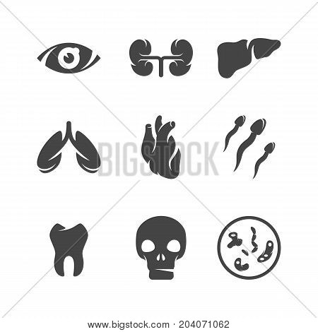 Modern icons set silhouettes of human organs. Medical symbol collection of heart lungs kidneys isolated on white background. Modern flat pictogram illustration. Human organs vector logo concept for web graphics - stock vector