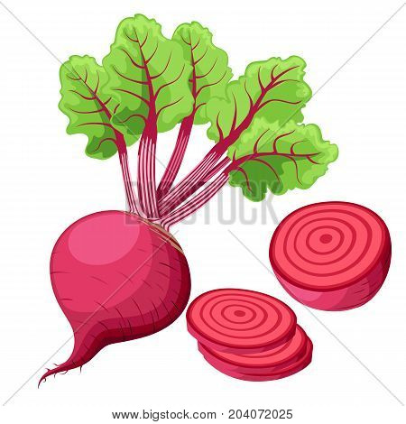 Vector Beets Isolated On Background. Red Beetroot Whole, Cut, Sliced. Set Of Fresh Beets In Differen