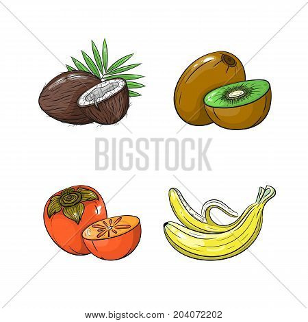 Collection set of hand drawn fruits isolated on white background. Vector illustration of coconut kiwi banana and persimmon in vintage sketch style - stock vector