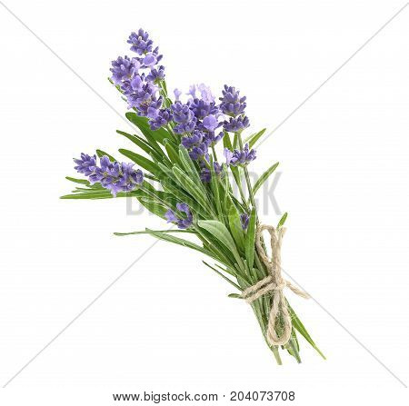Bunch of lavender flowers in soft tone isolated on a white background