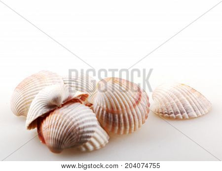 Seashell Isolated On White Color Image Stock Photos