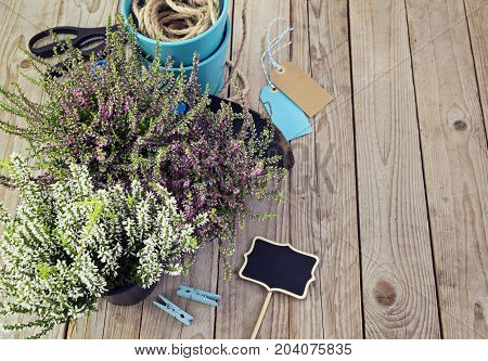 Fresh heather and garden tools. Preparation for planting in autumn, flat lay and copy space