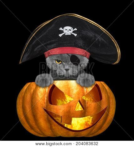 halloween pumpkin with cute cat in pirate costume - isolated on black background
