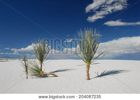 Vegetation is sparse among the dunes in White Sands National Monument in New Mexico.