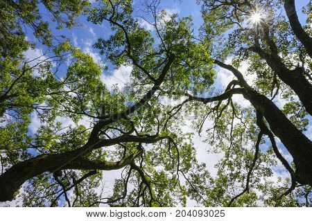 Spring landscape - green branches of spring forest trees extend to the blue sky in spring sunny day