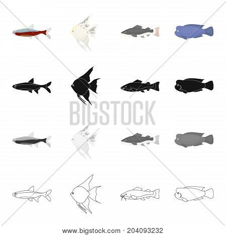 Different types of aquarium and marine fish, scaly, neon. A fish set collection icons in cartoon black monochrome outline style vector symbol stock illustration .