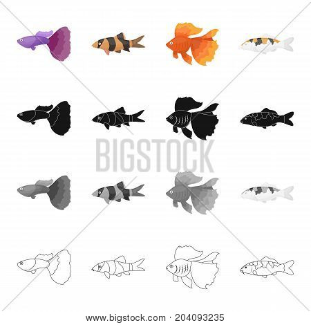Different types of aquarium and marine fish, guppies, gold. A fish set collection icons in cartoon black monochrome outline style vector symbol stock illustration .