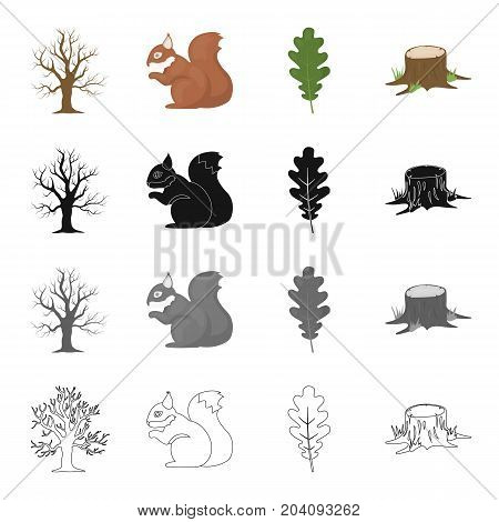 Dry tree in the forest, squirrel, oak leaf, stump. Forest set collection icons in cartoon black monochrome outline style vector symbol stock illustration .