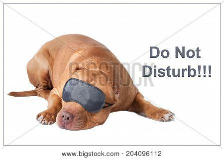 Dog pit bull in sleeping mask, isolated. There is no hurry, do not rush, do not panic, do not touch, no hurry, wait and see poster