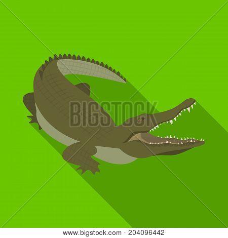 Crocodile, dangerous predator. Reptile, Nile crocodile single icon in flat style vector symbol stock illustration .