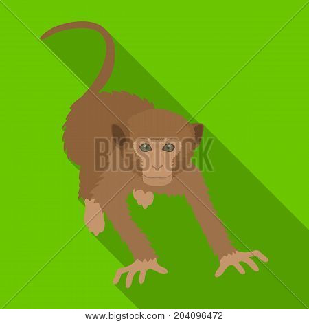 Monkey, wild animal of the jungle. Monkey, mammal primate single icon in flat style vector symbol stock illustration .