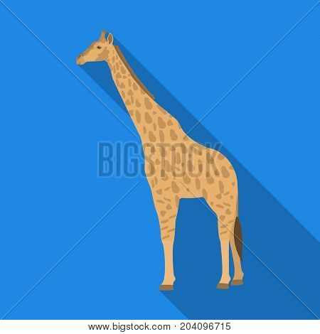 Giraffe is the highest land animal. A wild animal, a giraffe single icon in flat style vector symbol stock illustration .