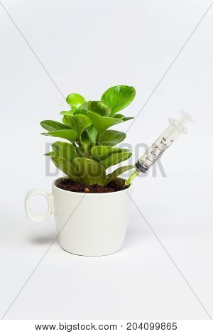 The syringe thrust in dirt in cup with tree