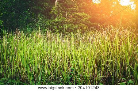 Green Growing Grass With Bright Sunlight.