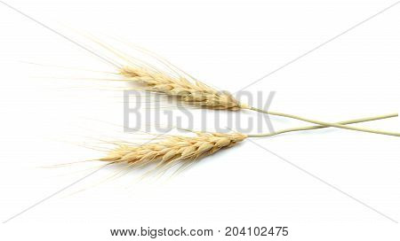 Spikelets Of Wheat Isolated On White Background. Top View