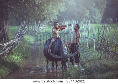 Asian boy playing violin on the buffalo for my dad and send a smile to each other happily in countryside thailand.