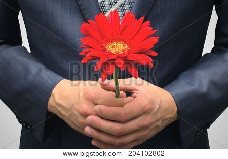 Meeting. Date. Rendezvous. Man in suit holding in hands red gerbera flower in front of him close up.
