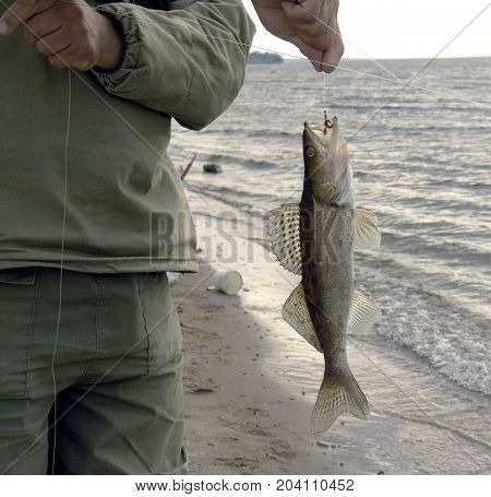 Small fish on a line caught using fishing rod and bait