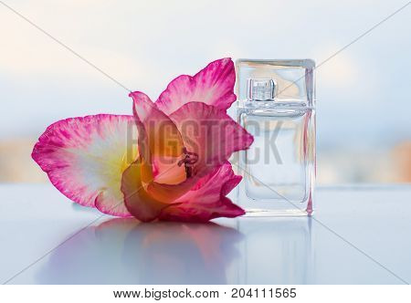 Perfume bottle with flowers on light background. Perfumery cosmetics fragrance collection.