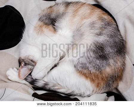 sleeping kitten. Orange kitty on summer vacation. Cute kitten