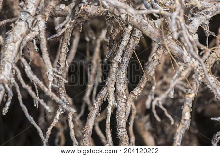 Trees in the mangrove forest. Roots background.