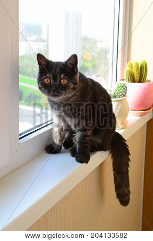 Five month old kitten sits on a windowsill