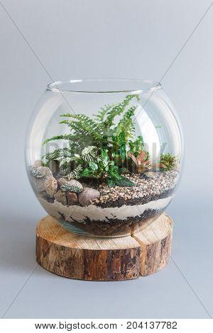 Fern terrarium in a round glass vase on grey background