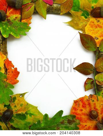 Frame from fallen leaves isolated on white.