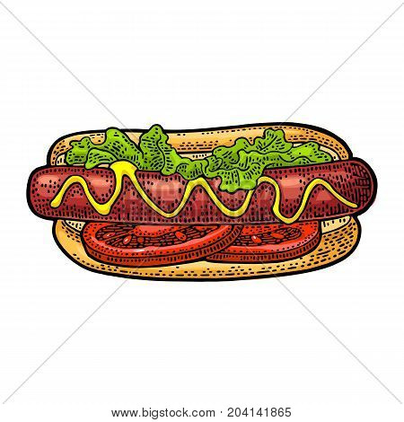Hotdog with tomato mustard leave lettuce. Top view. Vector color vintage engraving illustration for poster menu web. Isolated on white background.