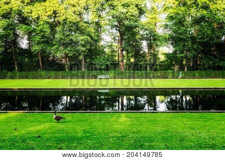Summer green park. City park with green grass pond trees ducks and bench. Summertime landscape background. Beauty in nature