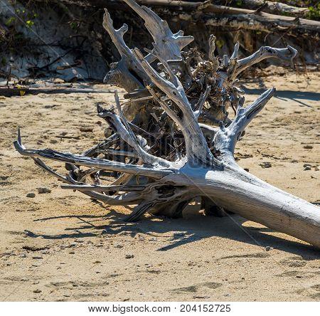 Old Tree On Sandy Beach