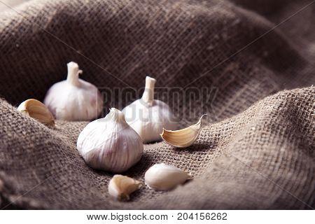 Fresh Garlic. Garlic bulbs and garlic cloves on sackcloth background