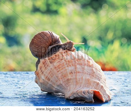funny snail crawled to celebrate a housewarming party in the beautiful new sea shell