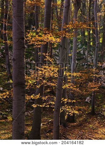 Inside forests of Djerdap national park at Miroc mountain on a fall sunny day in east Serbia