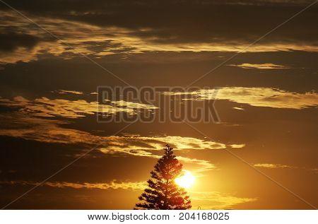 Fotografia do por do sol atrás de pinheiro