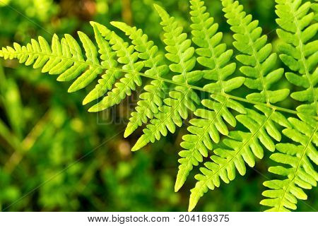 natural texture one green leaf of a fern closeup