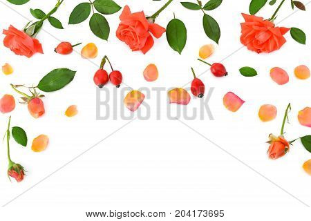 Pink roses isolated on white background. Flat lay top view. Free space for text.