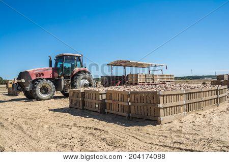 A north Mississippi sweet potato harvesting operation.