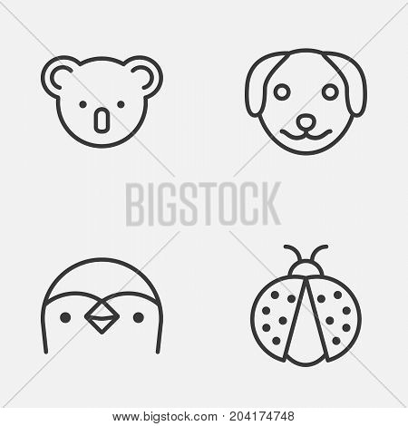 Nature Icons Set. Collection Of Puppy, Marsupial, Ladybird And Other Elements
