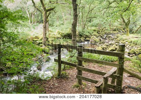 Trail by the river. Taken in Dartmoor National Park.