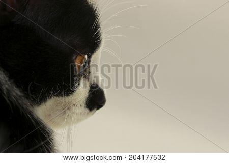 Cropped shot of a cute  black Cat.