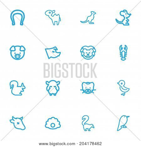 Set Of 16 Editable Zoology Outline Icons. Includes Symbols Such As Piglet, Bobcat, Pearl And More