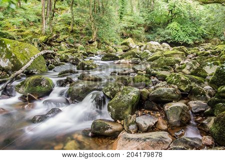 Meandering river through ancient forest of Dartmoor, UK.