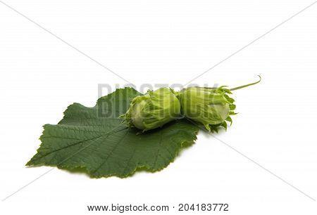 Green walnut hazel isolated on white background