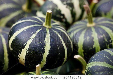 Striped green pumpkins halloween background. Organic vegetables still life. Shallow depth of field photo.