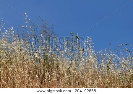 Summer nature dry plants vegetation and blue sky.
