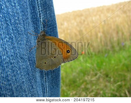 a butterfly sat on the jeans in the background