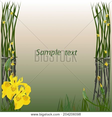 Frame for the text (card) with the drawing of a marsh iris (Iris pseudacorus) the color vector image