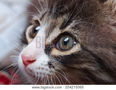 charming young cat,  pretty portrait kitty ,