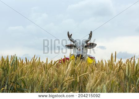 QuievyFrance - July 07 2015: A persons in a stag disguise is hiding in the cereal field during the stage 4 of Le Tour de France 2015 in Quievy France on 07 July2015.